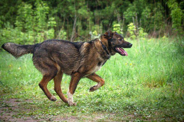 Ищет дом собака по имени Гера