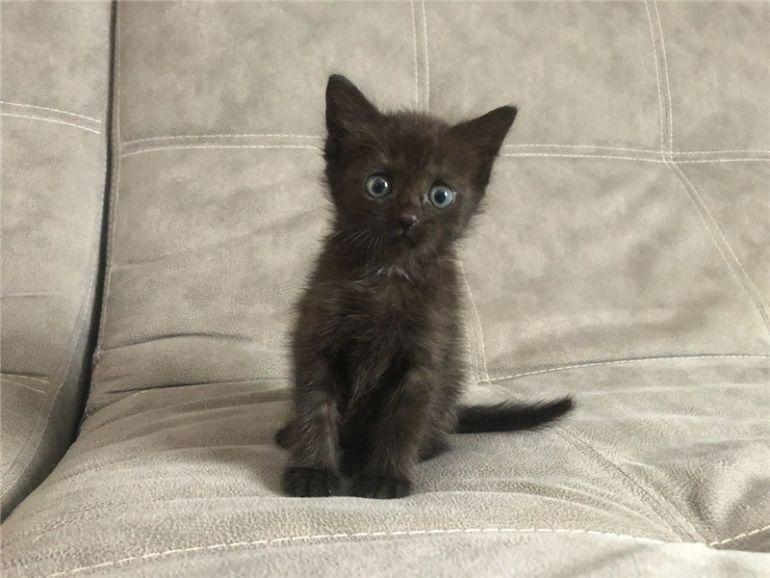 Ищет дом очаровательный котёнок (девочка)