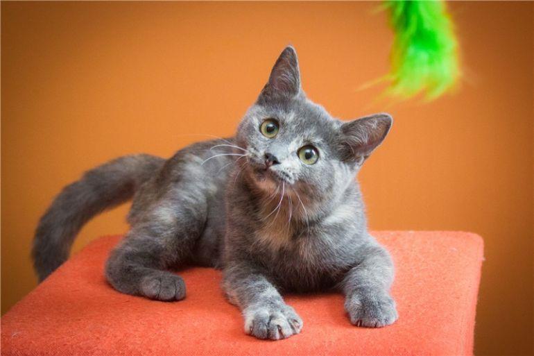 Милый котёнок Арья в добрые руки