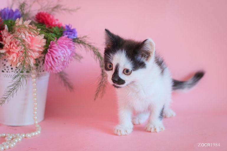 Котёнок Арамис ждёт хозяина