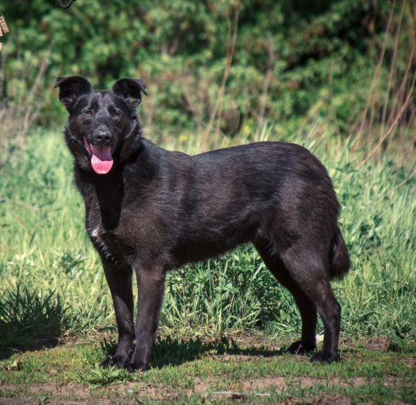 Чудесная собака Берта в добрые руки