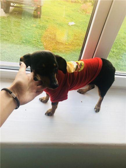 Ищет дом собачка Юрмала