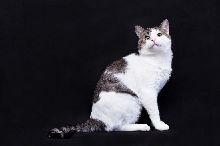 Настоящий кот в дар