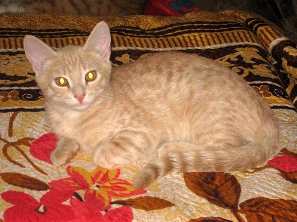 Котенок Рыжик - солнечное счастье в дом