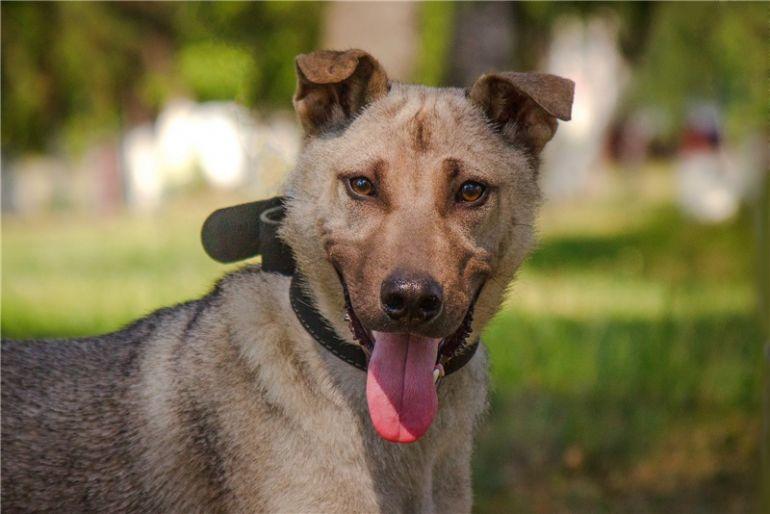 Чудесный щенок ищет дом