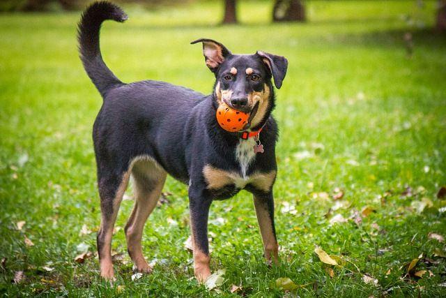 Добрая собака Жуня в добрые руки