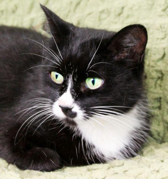 Открытая добрая подруга кошка Марта ищет дом