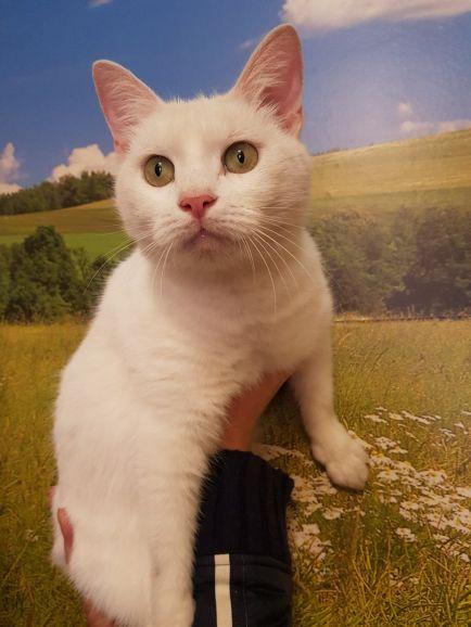 Котик Снег, возраст 2 года, очень хочет домой