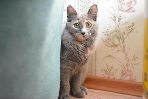 Котёнок Грейси в добрые руки