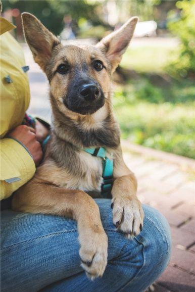 Очаровательный щенок Кнопа в добрые руки