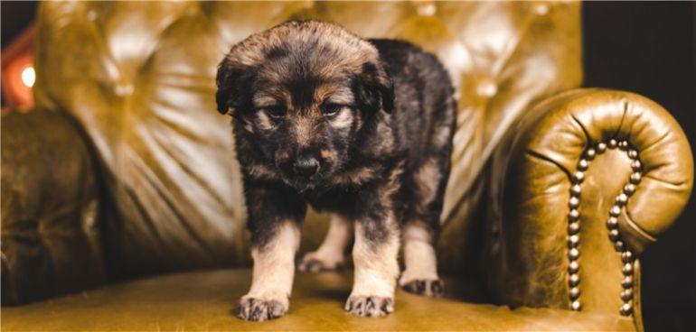 Чудесный щенок Ника ищет дом
