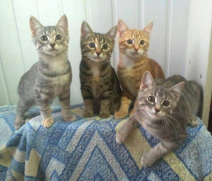 Очаровательные котята в самые добрые руки