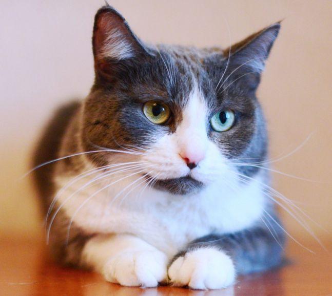 Барся - добрая, ласковая, уютная кошечка