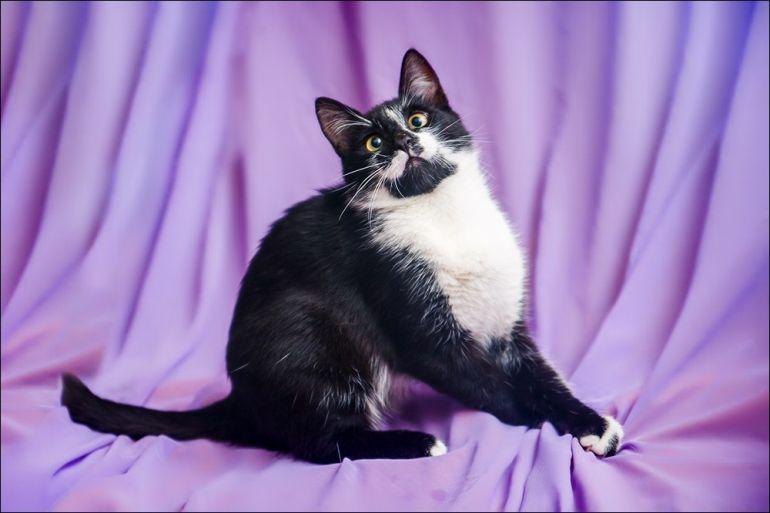 Маркизик Тиша, молодой весёлый котик, в дар