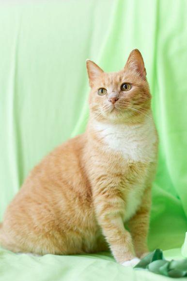 Боярыня Тяпа, рыжеватая блондинка. Кошечка в дар