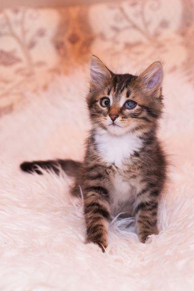 Особенный котёнок Кеша в дар