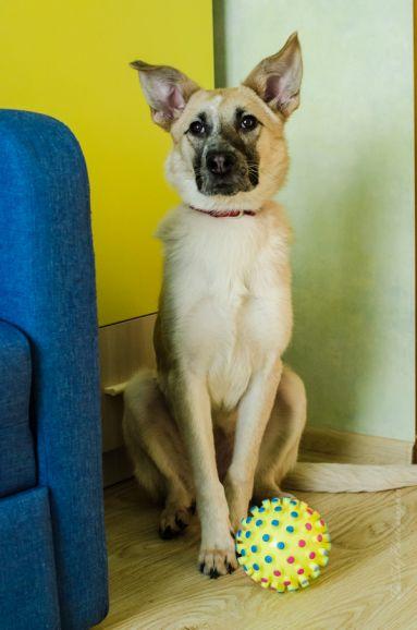 Наяда (возраст 1 год 2 месяца) ищет дом. Для любителей больших добрых собак