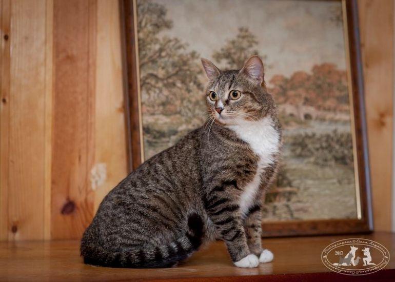 Кошечка-красавица Роси сильно хочет стать домашней