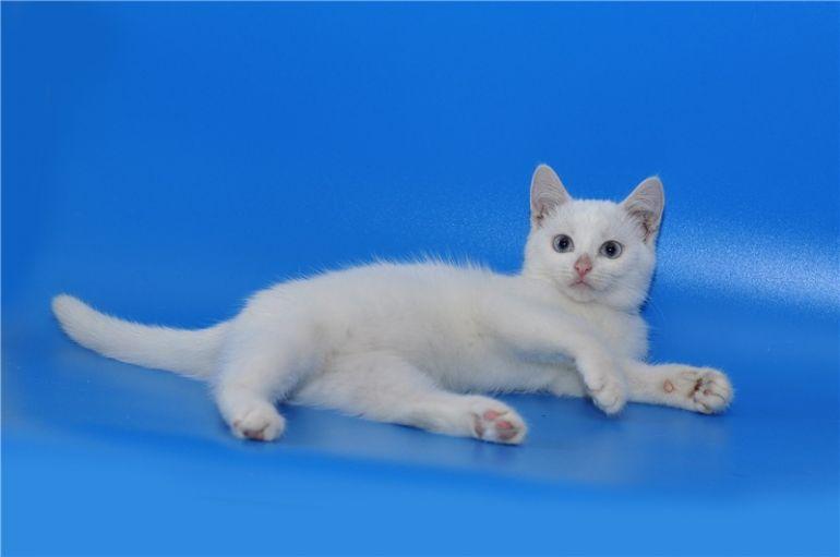Беленький котёнок в добрые руки