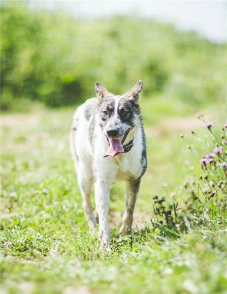 Прекрасная собачка Адель ищет дом