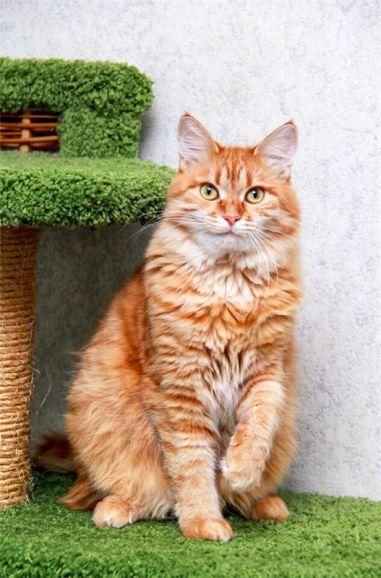 Молоденькая кошечка Кисуня ищет дом