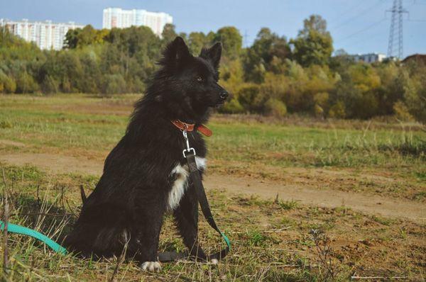 Небольшой и очень красивый пёсик Ричи ищет хозяев