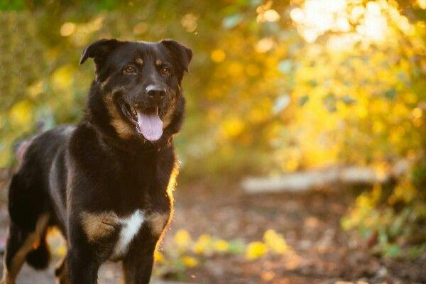 Дик - пёс чуткий и душевный в поиске семьи