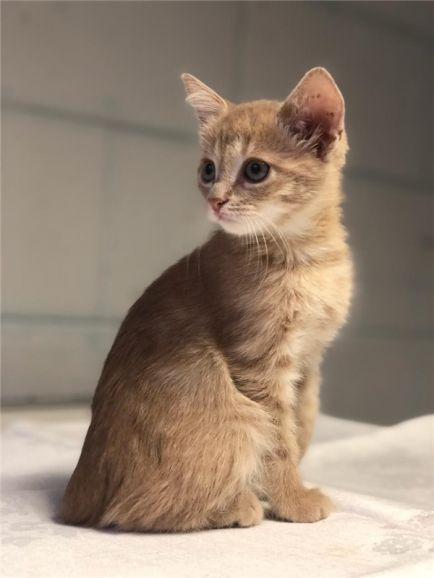 Котёнок Персик в добрые руки