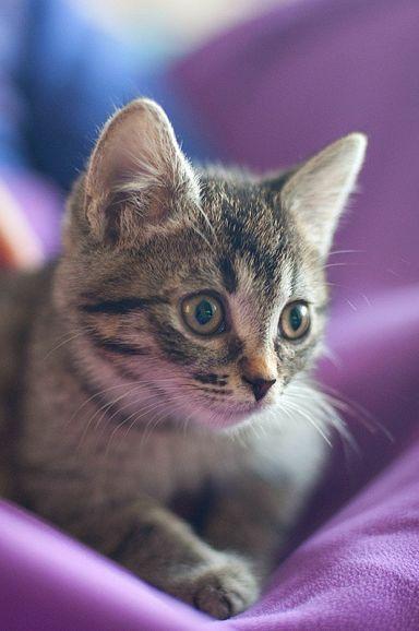 Нежная кошечка Тигра с богатым приданым
