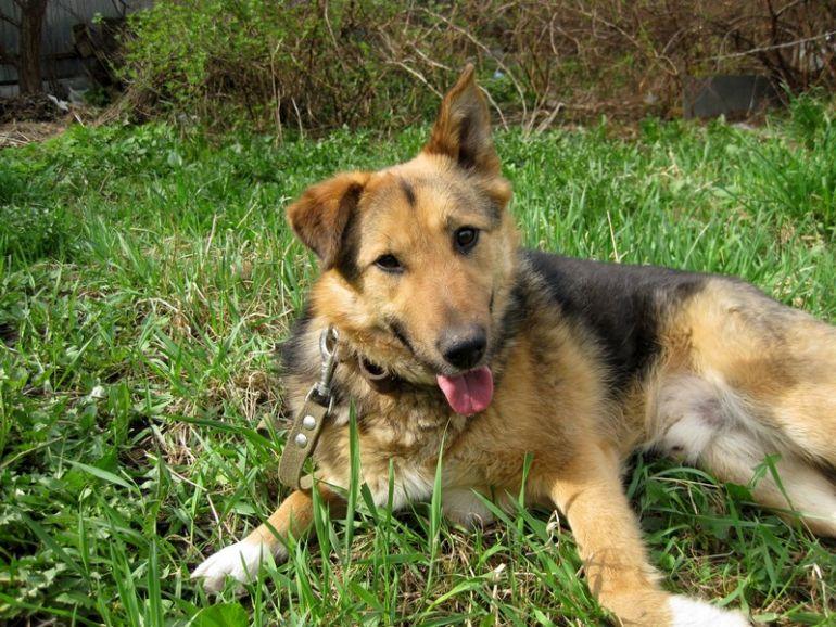 Тимоша - собака с душой фиалки