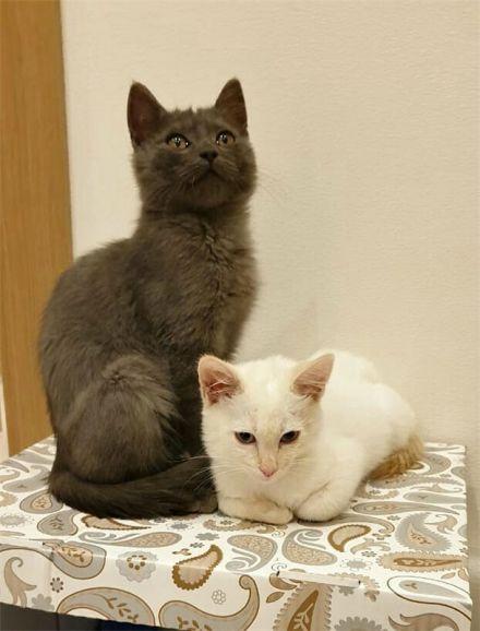 Котята Зефир и Оскар ищут дом