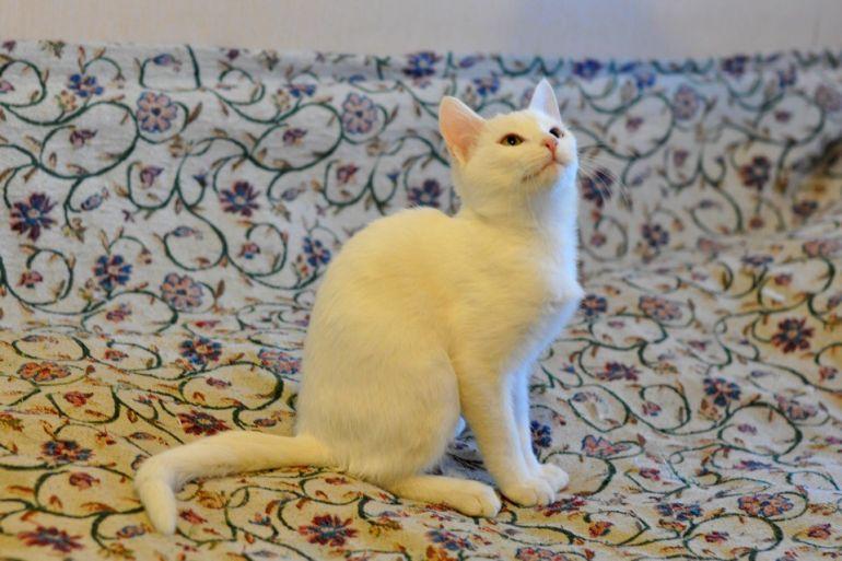Котёнок Каспер в добрые руки