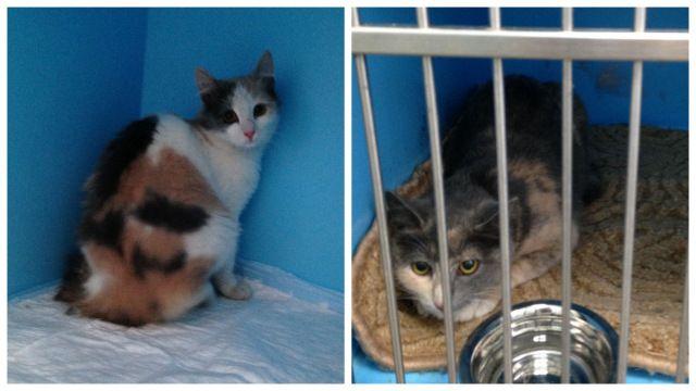 Кошечки Тася и Ася, трёхцветные красотки. Кошечки в беде, срочно нужен дом