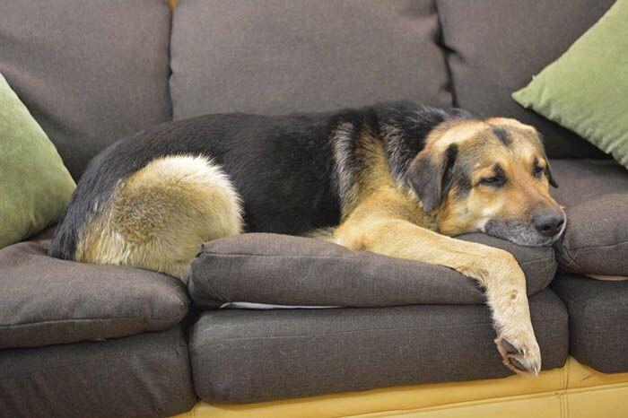 Галантный, домашний пёс в самом расцвете сил ищет дом