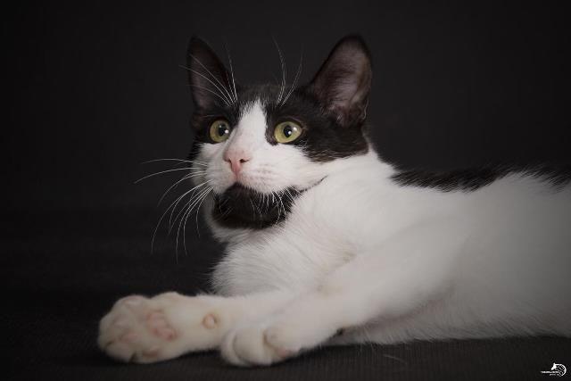 Дружелюбный красавец кот Марио в добрые руки