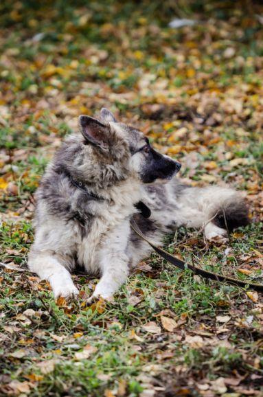 Люся - шикарная собака для истинных ценителей