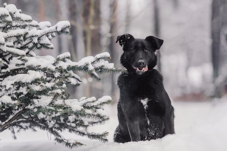 Чудесная собака в добрые руки