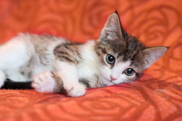 Котенок Любочка - трогательный ребёнок в дар