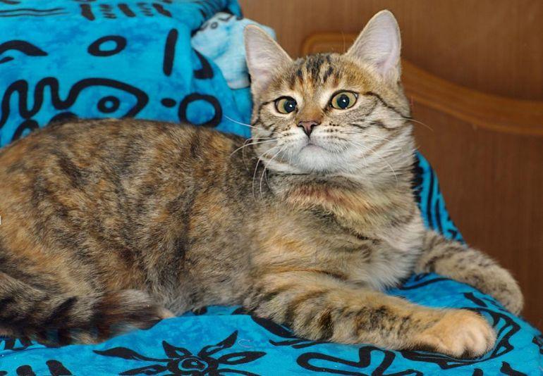 Котёнок с волшебным именем Благуша в дар