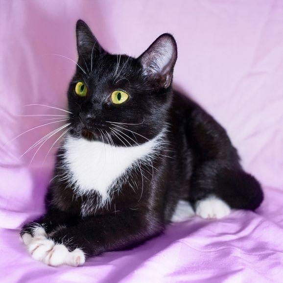 Ася - кошка, излучающая доброту ищет дом