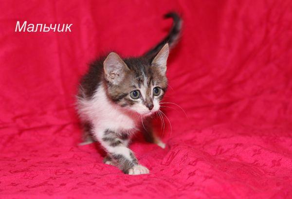 1,5 мес котята-малышата в добрые руки в дар