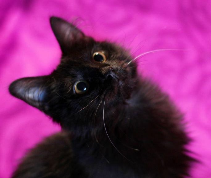 Ищет семью котенок Нафаня черныш-белоус
