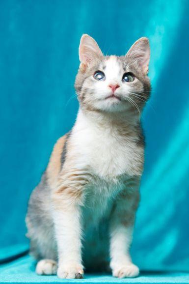 Ищет дом особенный котёнок Молли