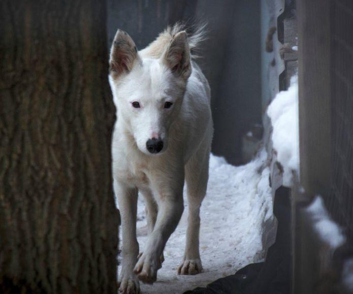 Очаровательная собачка ищет дом