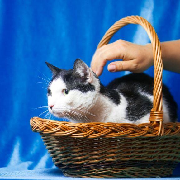 Кот Василёк ищет дом