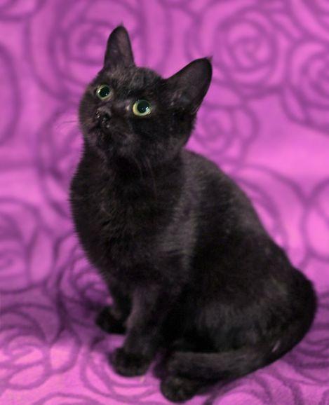 Котёнок Кляксыч источник оптимизма в дар