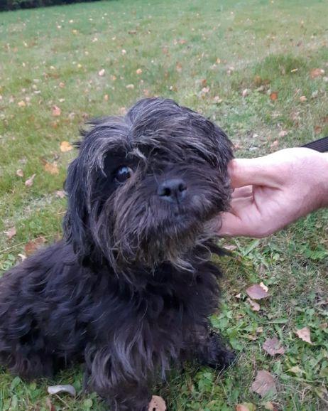 Ищет дом миниатюрная собачка Лялечка