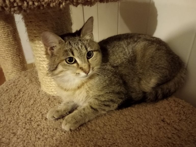 Кошечка Рыся в добрые руки