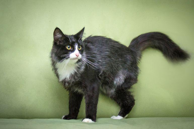 Особенный трёхлапиковый котик Флинт, жертва капкана, ищет свою, самую добрую семью