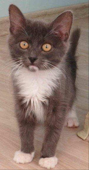 Ласковый, ручной котёнок-мурчалка ищет новый дом